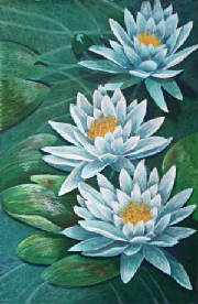 Floral/Waterlily.jpg